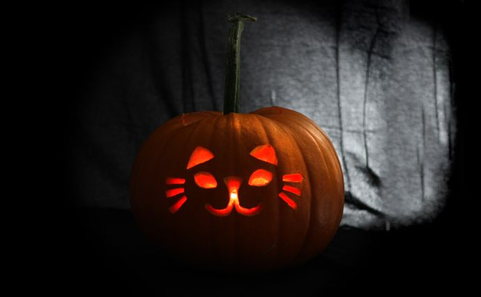 Easy Cat Pumpkin Design